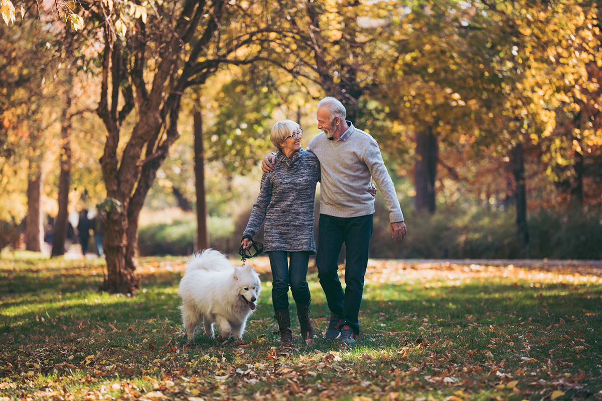 Senior couple walking their dog in a beautiful autumn park